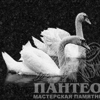 Гравировка пара лебедей